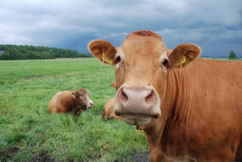 la-leche-es-buena-para-la-salud-2