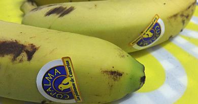 Oda al plátano de Canarias
